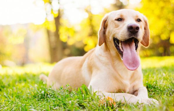 Grass Seed Season Dog, Grass seed season pets
